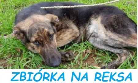 Pomoc dla malborskiego schroniska  dla zwierząt ,,Reks''